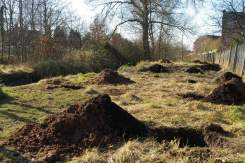 The prepared orchard site
