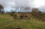 SACV and FotFL volunteers work on new community orchard, Abbey Heyii