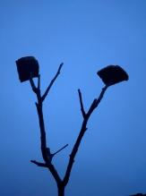 Toast on the trees