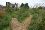 Chipping on orchard paths 1