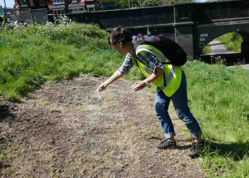 A volunteers sows wildflower seeds
