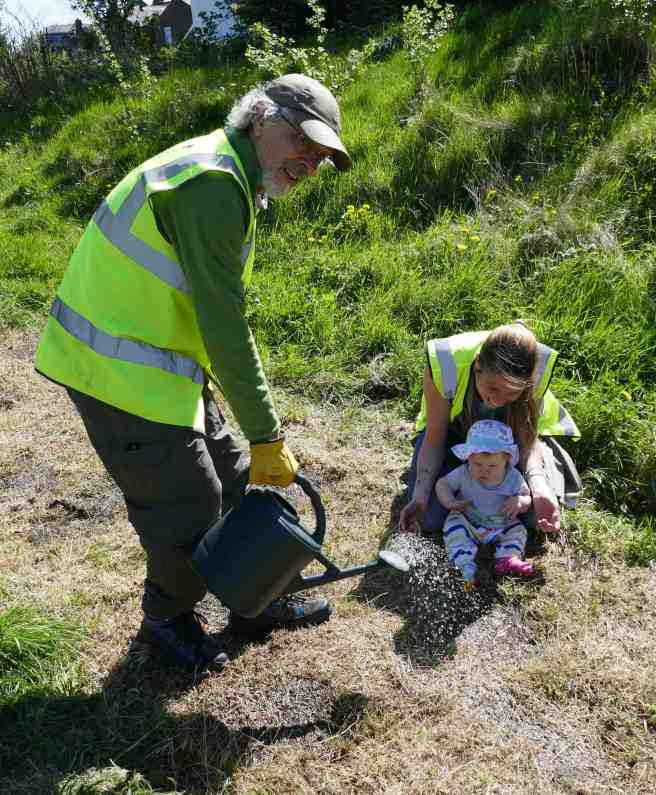 Volunteers sow wildflower seeds
