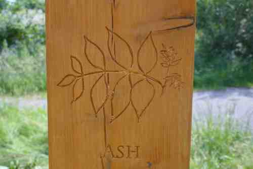 Ash carving