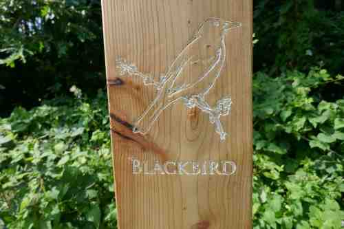 Blackbird carving