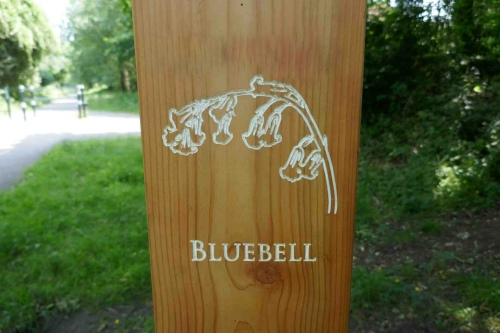 Bluebell carving