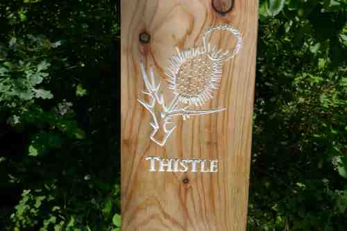 Thistle carving