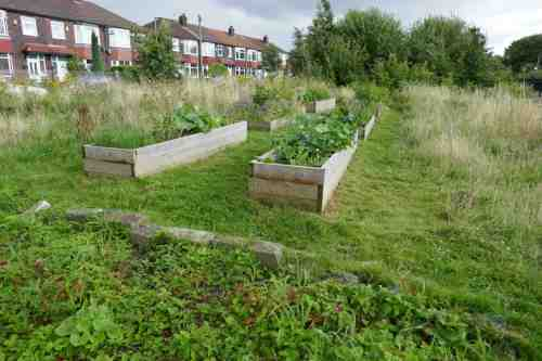 Raised beds at Levenshulme quadrants