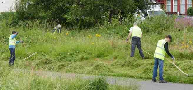 Volunteers scything