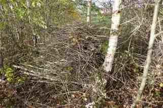 Habitat piles